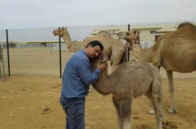 Camel Cloning