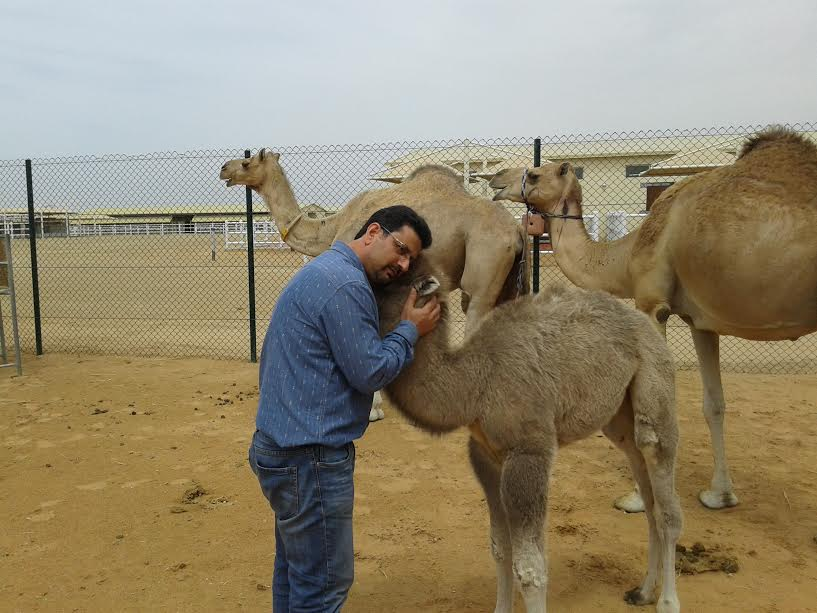Watch: Here's how this Kashmiri man has become the father of camel cloning in Dubai