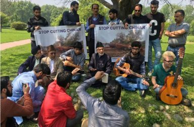 Save Chinar campaign