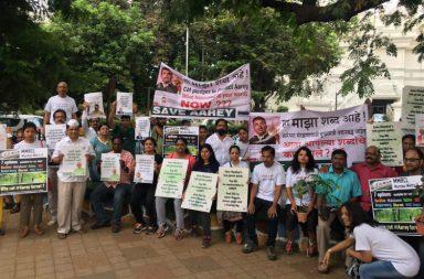Environment activists, Mumbai, Aarey Colony, trees, Metro III construction