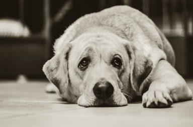 Dog Pakistan, Dog death sentence