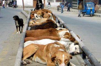 Kashmir, unemployment, dog catchers