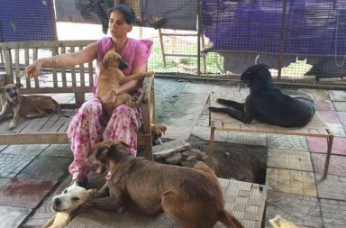 30 dogs brutally attacked in Mohali