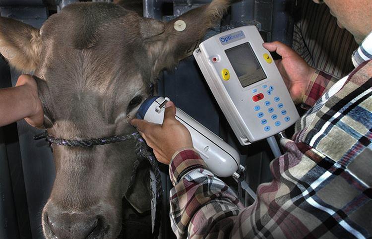 Gujarat govt begins to create Aadhaar like UID for cows, implants