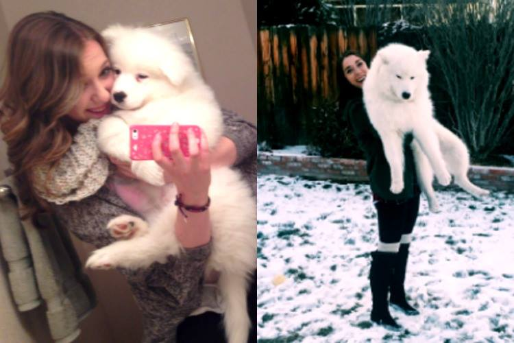 Ally Champagne Stone, Twitter dog transformation