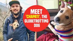 Travelling Chapati: Desi pup adopted by Ukrainian couple is now a globetrotter