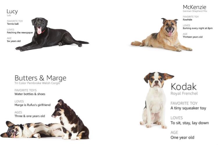 amazon, dogs