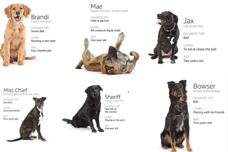 amazon. dogs