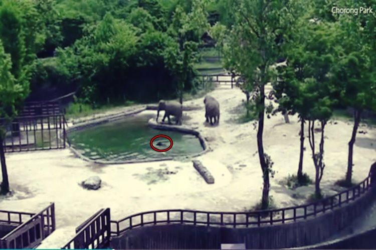 Moscow's zoo shows off baby Asian elephant to public