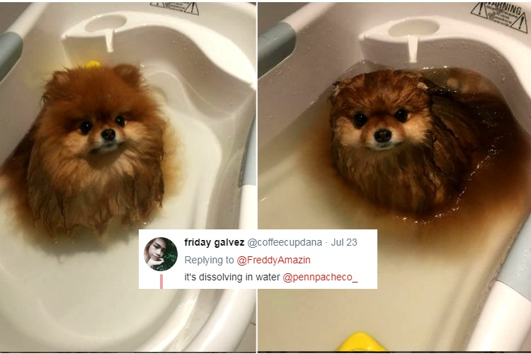 This Little Pomeranian Has Become An Internet Sensation Overnight - Someone should have told this dog owner that pomeranians melt in water