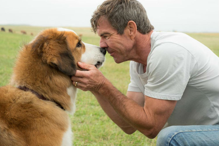 A Dog's Purpose, Hollywood Film