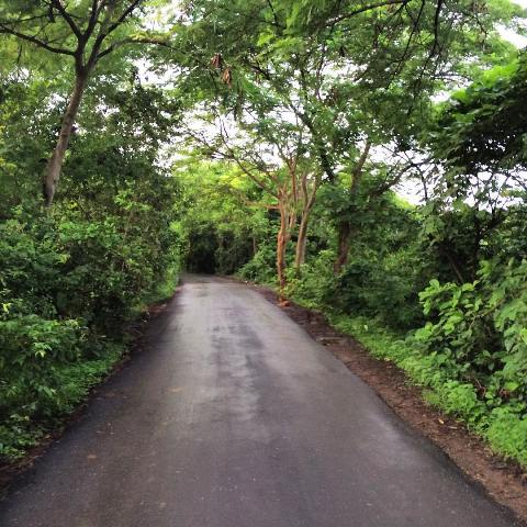 Aarey Milk Colony is one of the haunted places in the city