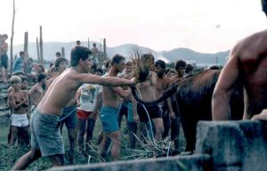 brazil animal cruelty