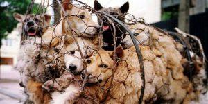 dog killing and eating China