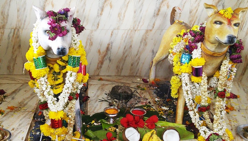 dog-temple-cover