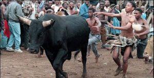 Umkhosi Ukweshwama celebrated by Zulu community