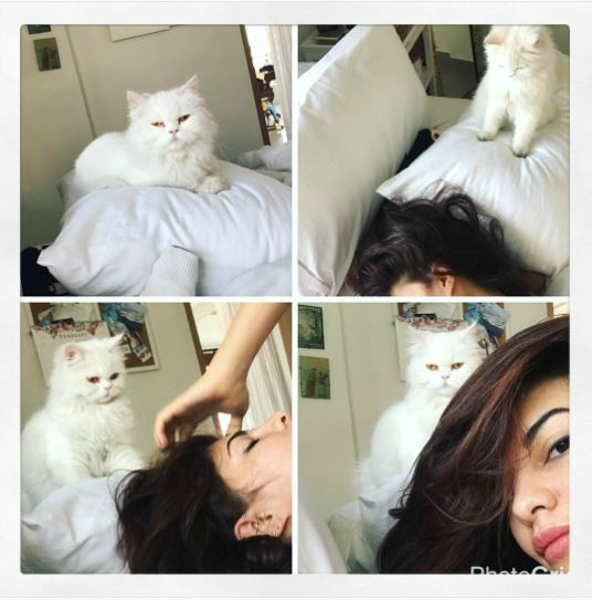 Jacqueline Fernandes with her cat