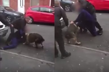 UK man bites dog