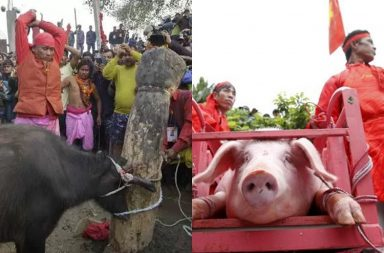 seven festivals in which animals are killed
