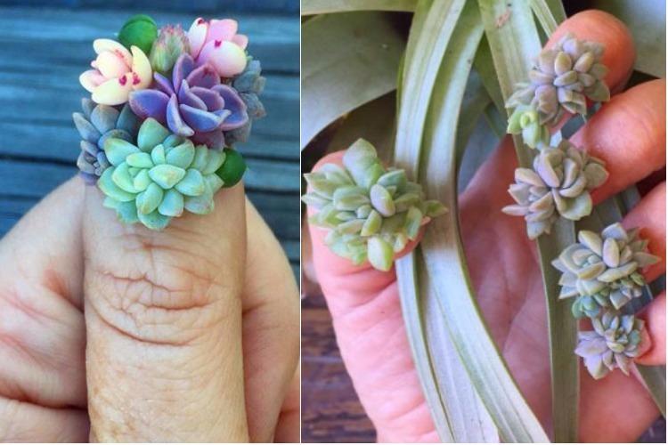Succulent nail art trend