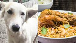 Aurangabad civic body in a tizzy after being warned about restaurants allegedly serving dog meat in biryani