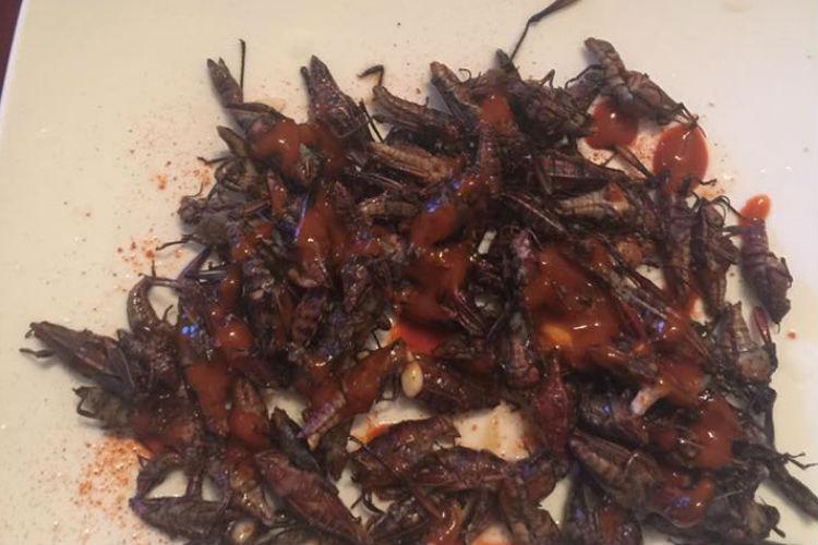 crickets, food