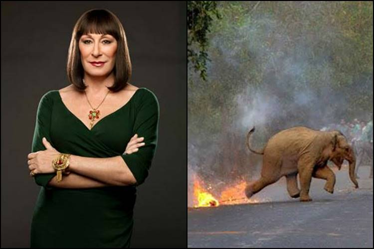 Oscar winner wants India to ban elephant rides again. It takes an outsider to point out everyday Indiancruelty