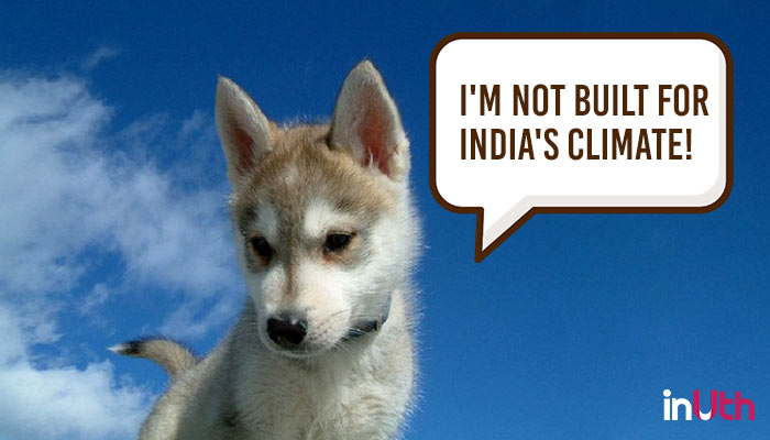 St Bernards and Huskies in Mumbai? We need to stop bringing dogs to the wrongclimate!