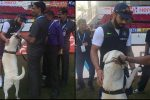 Aww! Virat Kohli cuddles security dog during 2nd Test, video will touch your heart – Watch