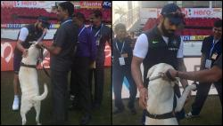 Aww! Virat Kohli cuddles security dog during 2nd Test, video will touch your heart - Watch