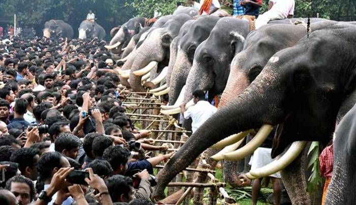 The dark side of wildlife tourism: Here's how captive elephants are abused in India