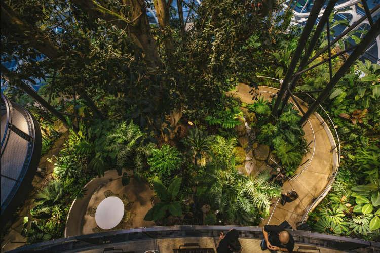 Amazon Sphere