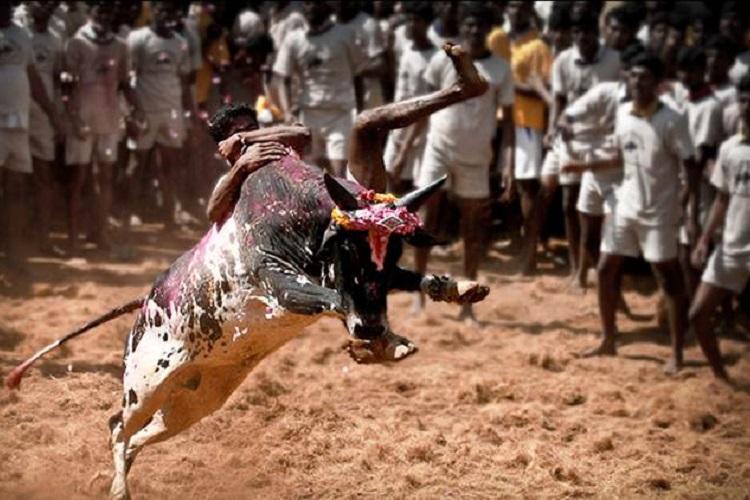 Jallikattu kills! Spectator killed inMadurai