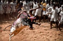 Jallikattu kills! Spectator killed in Madurai