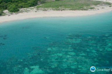 coral-reef-siege-copy