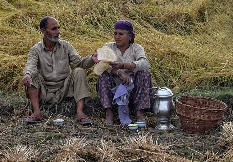An elderly Kashmiri couple in the paddy fields