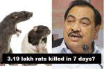 Over 3 Lakh Rats Killed In 7 Days: BJP leader Smells A 'Rat-Scam' In MaharashtraMantralaya