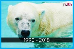 Inuka, World's Only Tropical Polar Bear Is No More