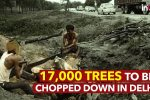 While Delhi Chokes Under Pollution, Govt May Chop Off 17000 Trees To Accommodate 'Babus'