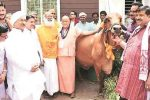 This Swami With 'Cabinet Rank' In MP Wants A Separate Ministry Dedicated To Cows