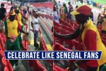 FIFA World Cup 2018: Senegal Fans Celebrated Their Win Over Poland By Cleaning Stadium and Tweeps Love'em