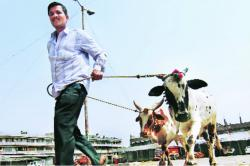 This Village In UP Plans To Build A Temple In The Memory Of A Bull