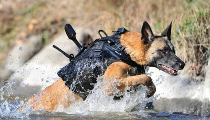 Dogs Who Helped US Forces To Track Osama Bin Laden To Guard DelhiMetro