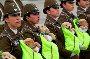 chile puppy parade