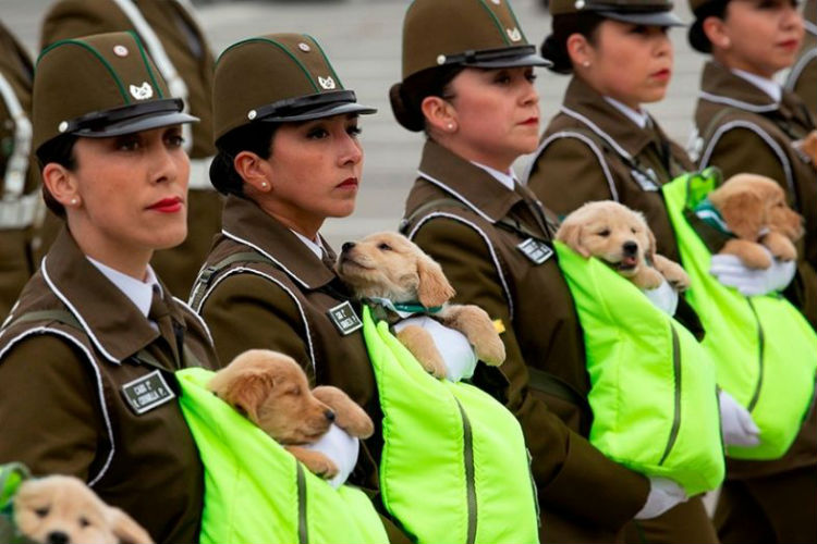 A Parade With Puppers? YAAAS PLISSS! (Heavy Breathing)