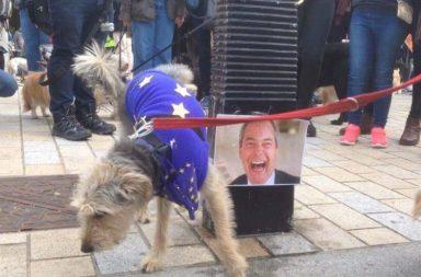 brexit dog protest