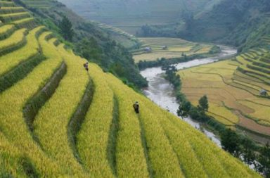nagaland agriculture