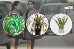 5 Easy-To-Maintain Houseplants That Can Improve Indoor AirQuality