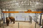 In A First, India Gets Elephant Hospital Equipped With Unique Medical Facilities