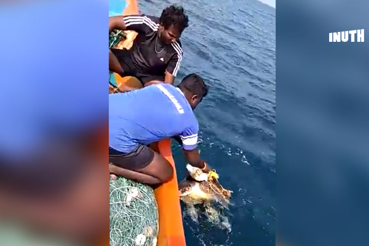 How Two Tamil Nadu Fishermen Rescued An Olive Ridley Turtle